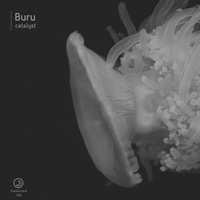 Buru – Catalyst